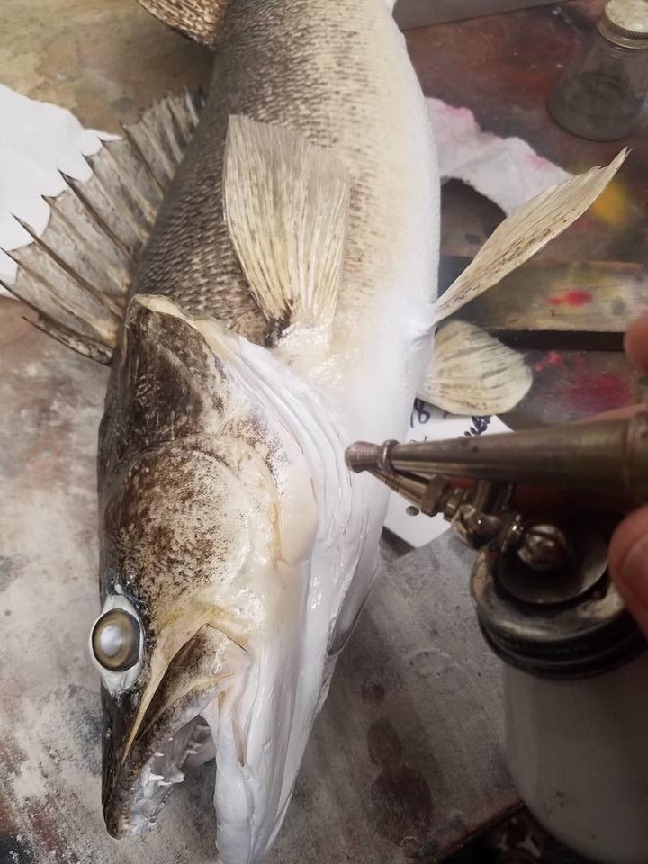 fish15